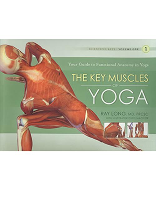 byron-yoga-key-muscles-of-yoga