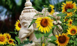 ahimsa-ganesh-byron-yoga